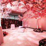 white trees pink cherry blossom foliage