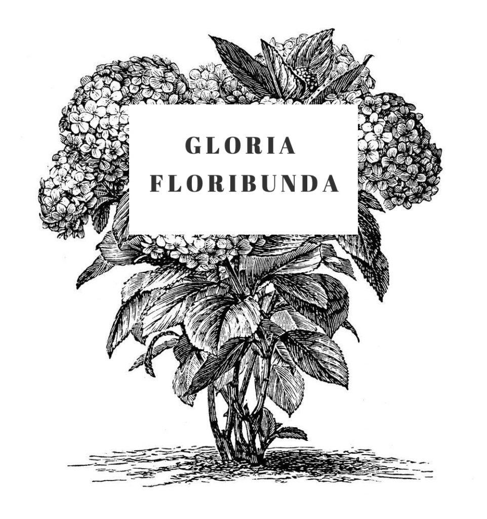 Gloria Floribunda with text