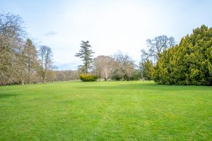 Lawn with trees at the back