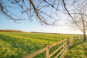 Looking over a wooden fence through the ends of tree branches across a field at sunrise